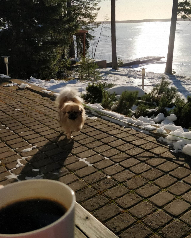 Kahvitauko eLuotsin terassilla tiibetinspanieli Elmerin kanssa